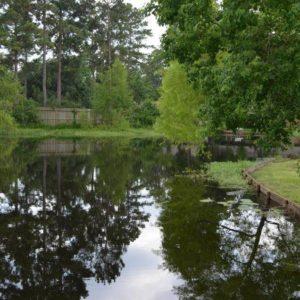 Magnolia pond